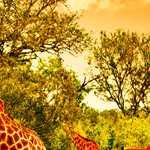 Kenya'da Safari & Zanzibar'da Deniz Turu (21-27 Nisan 2019)